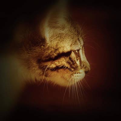 Wall Art - Photograph - Curious Kitten by David G Paul