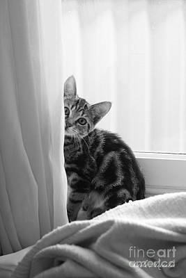 Layla Photograph - Curious Kitten by Layla Alexander