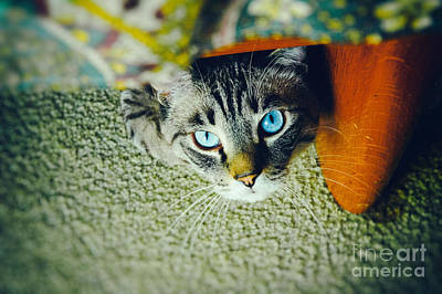 Print featuring the photograph Curious Kitty by Silvia Ganora