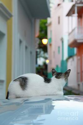 Photograph - Curious Kitty by Suzanne Oesterling