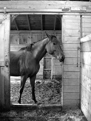 Laura Palmer Photograph - Curious by Laura Palmer