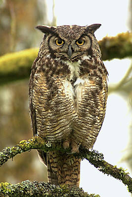 Photograph - Curious Owl by Craig Strand