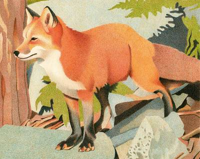 Drawing - Curious Red Fox by Dan Miller