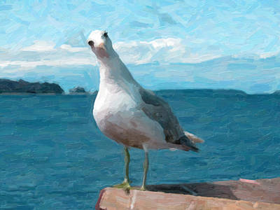 National Pyrography - Curious Seagull by Artistic Panda