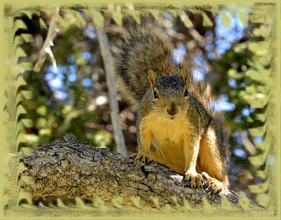 Curious Squirrel 2 Art Print by Kae Cheatham