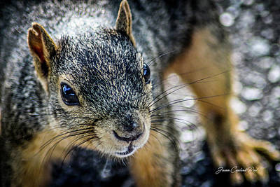 Photograph - Curious Squirrel by Joann Copeland-Paul
