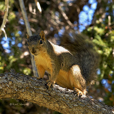 Curious Squirrel  Art Print by Kae Cheatham