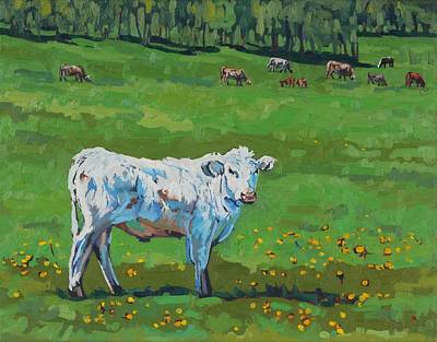 Painting - Curious Steer by Phil Chadwick