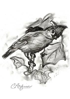 Titmouse Drawing - Curious Titmouse by Carol Allen Anfinsen