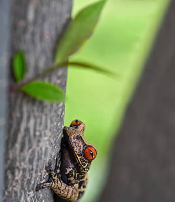 curious tree frog Amazon jungle Art Print