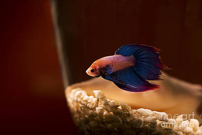 Photograph - Curious Tropical Fish by Jorgo Photography - Wall Art Gallery