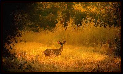 Photograph - Curious Visitor by Sherri Meyer