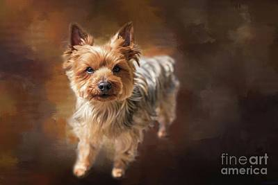Photograph - Curious Yorkie by Eva Lechner