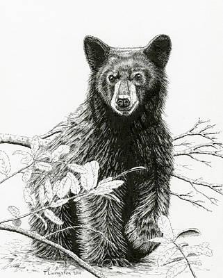 Curious Young Bear Art Print