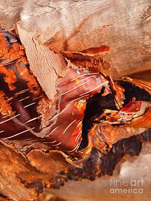 Curled Bark Art Print by Tara Turner