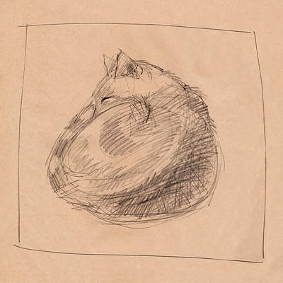 Drawing - Curled Up by Judith Kunzle