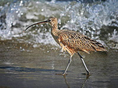 Curlew And Tides Art Print by William Lee