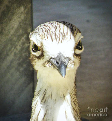 Slim Shady Photograph - Curlew Close Up. by Trudee Hunter