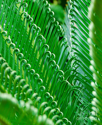 Blue Hues - Curly King Sago Palm Branches by Nancy Mueller