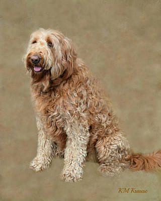 Photograph - Curly Labradoodle by Kathy M Krause