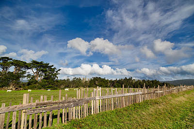 Curly Lane Cattle Fence Art Print
