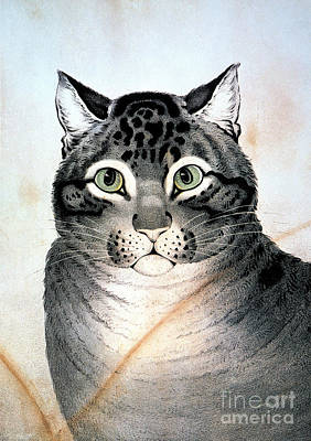 Currier And Ives Cat Art Print by Granger