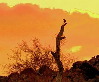 Photograph - Curve-billed Thrasher Silhouette At Sunset by Judy Kennedy