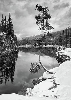 Horseshoe Lake Photograph - Curve In The Tree - B/w by Michael Blanchette
