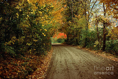 Photograph - Curve Of A Colorful Road by Wernher Krutein