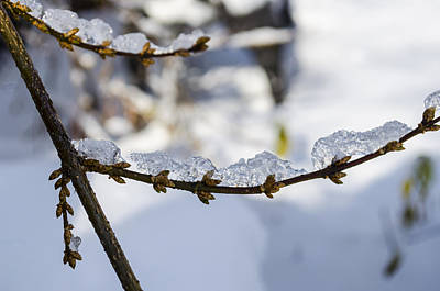 Leaves Photograph - Curved Clumps Of Ice by Deborah Smolinske