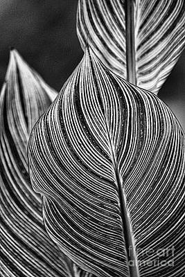 Photograph - Curved Lines by Aimelle