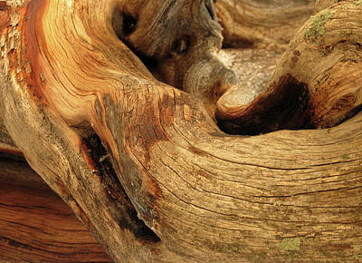 Photograph - Curved Wood by Laurel Powell