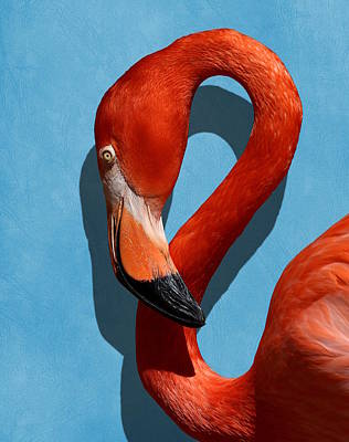 Photograph - Curves, A Head - A Flamingo Portrait by Debi Dalio