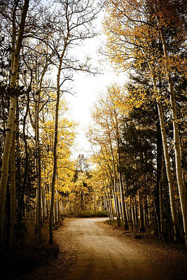Photograph - Curves And Aspens by Marilyn Hunt