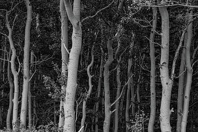 Photograph - Curves Of A Forest by James BO Insogna