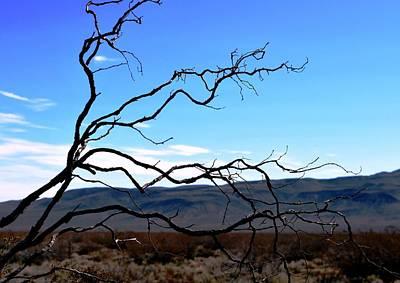 Photograph - Curvy Branches Desert Landscape by Matt Harang