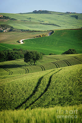 Photograph - Curvy Lines In Tuscany by IPics Photography