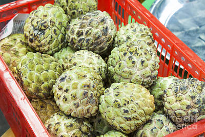 Annona Photograph - Custard Apples Annona Squamosa by D R