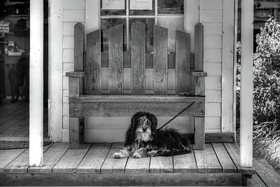 Photograph - Custer Porch Puppy by Richard J Cassato