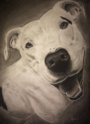 Pitbull Drawing - Custom Drawing by Benjamin Gassmann