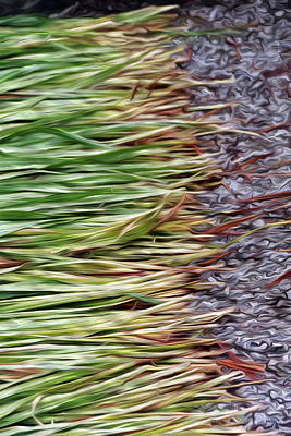 Digital Art - Cut Grass And Pebbles by Hold Still Photography