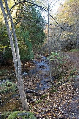 Reptiles - Cut River Walk by Linda Kerkau