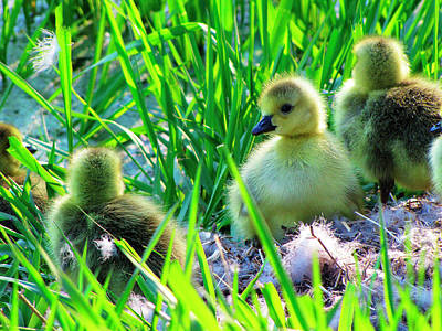 Photograph - Cute And Fuzzy - Take 1 by Scott Hovind