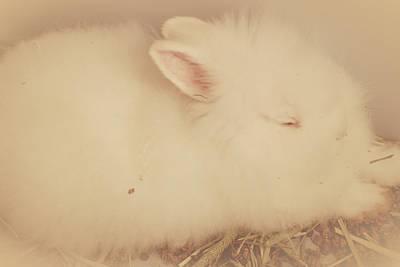 Bunny Photograph - Cute Angel Bunny by The Art Of Marilyn Ridoutt-Greene