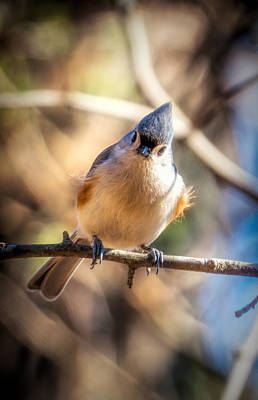 Photograph - Cute Bird by Lilia D