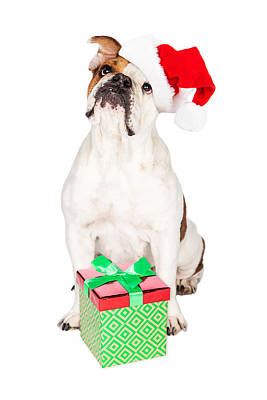 Photograph - Cute Bulldog With Christmas Present by Susan Schmitz