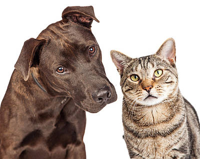 Dog Close-up Photograph - Cute Cat And Dog Closeup Photo by Susan Schmitz