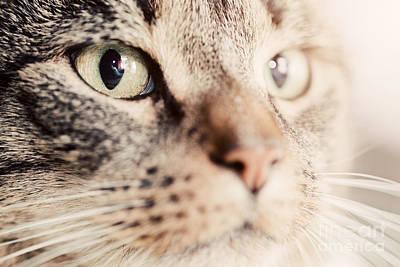 Watch Photograph - Cute Cat Close-up Portrait by Michal Bednarek