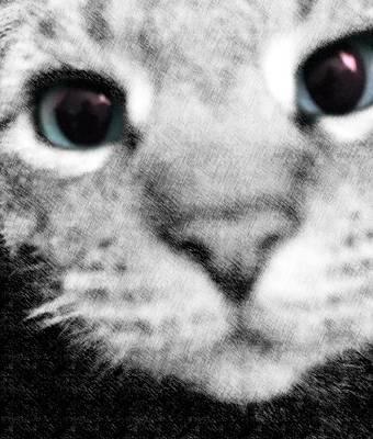 Photograph - Cute Cat by Marianna Mills