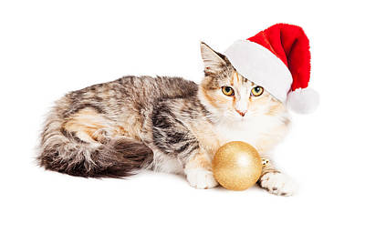 Photograph - Cute Christmas Calico Kitten by Susan Schmitz